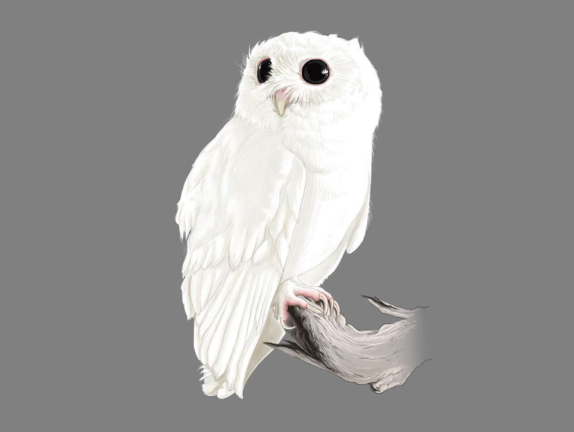 White Screech Owl Illustration