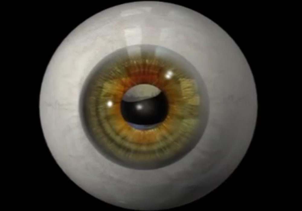 Eye Anatomy and Photoexcitation Animation