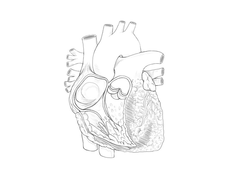 Heart Line Art Illustration