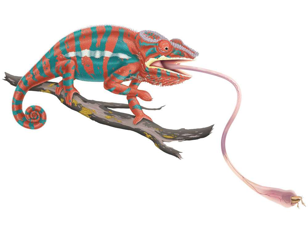 Panther Chameleon Illustration