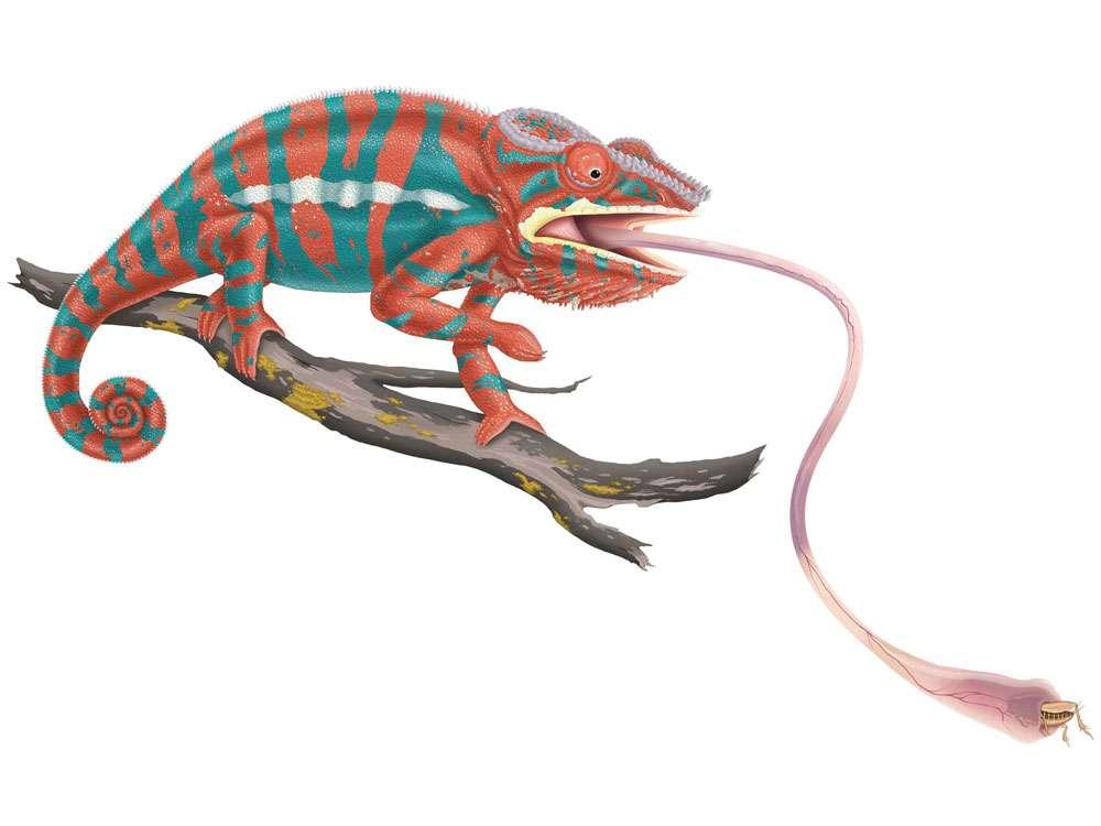 Panther Chameleon Illustration