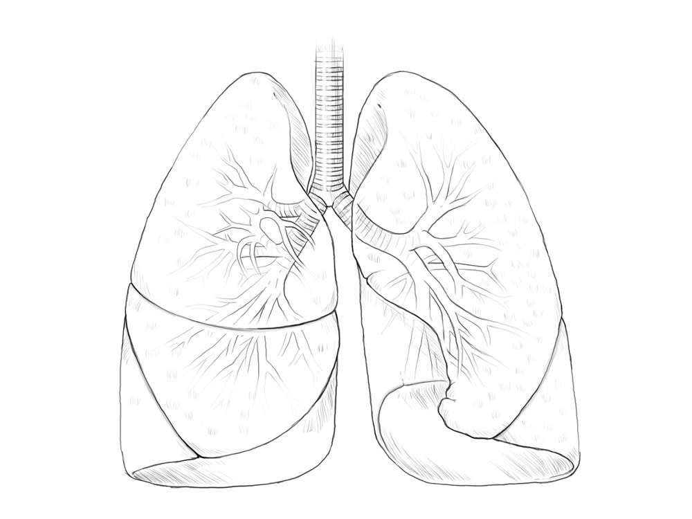 Lungs Line Art Illustration