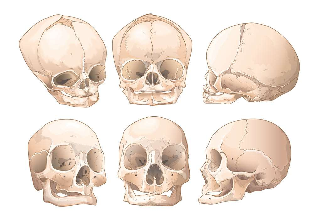 Human Skulls Illustration