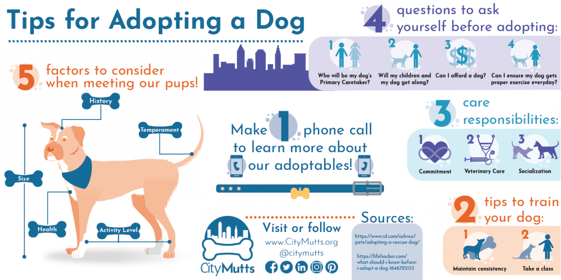 Dog Adoption Tips