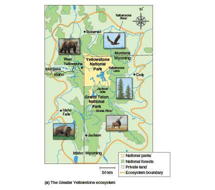 The Greater Yellowstone Ecosystem